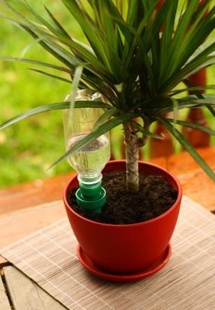 Система автополива комнатных растений своими руками