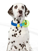 GPS-маячок на ошейник собаки, GSM-поводок