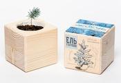 ЭКОКУБ (ECB-01-01) Голубая ель, Набор для выращивания