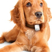 Трекер GPS для животных Medgadgets The Tractive GPS PET TRACKING DEVICE